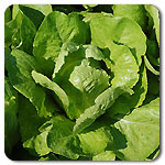 Jericho-Organic-Lettuce-See-01